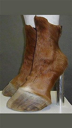 Pantofi și sutiene - Pantofi 8