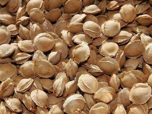 Semințe