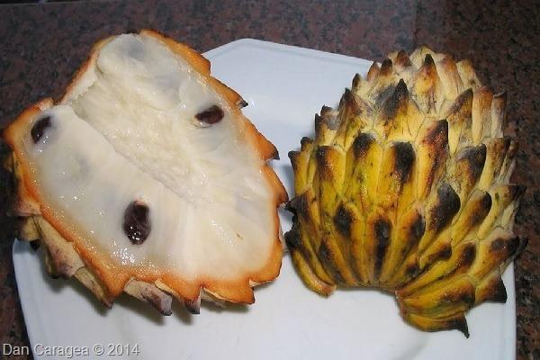 Fructe - Biriba