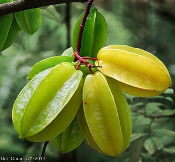 Fructe - Carambola