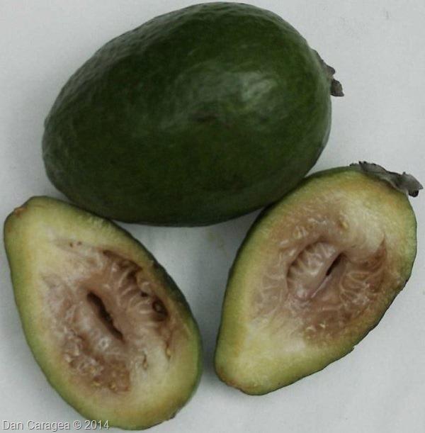 Fructe - Feijoa