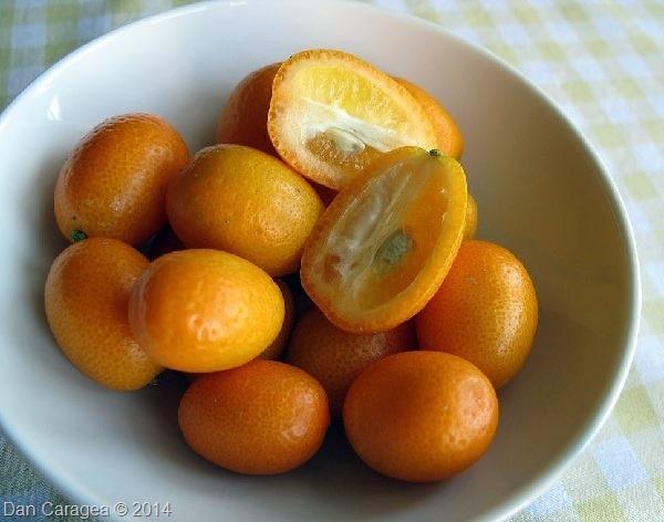Fructe - Kumquat
