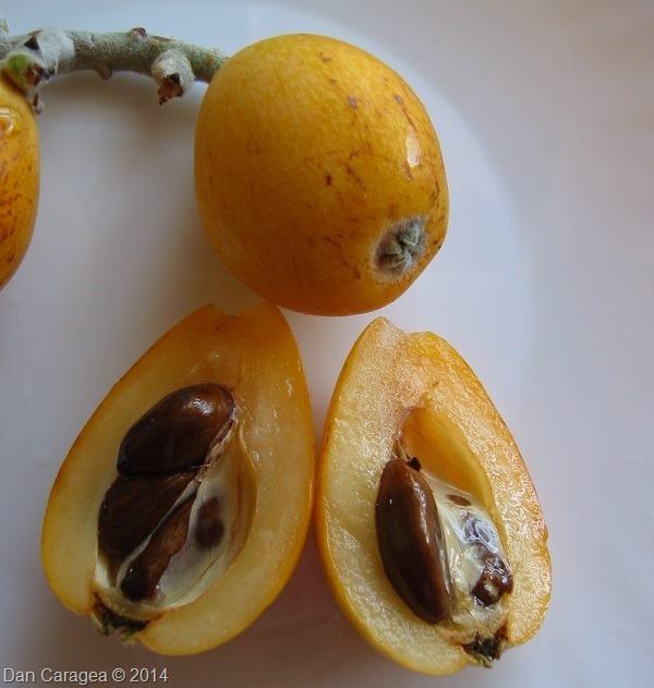 Fructe - Moșmon japonez