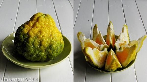 Fructe - Ugli