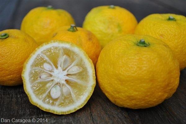 Fructe - Yuzu