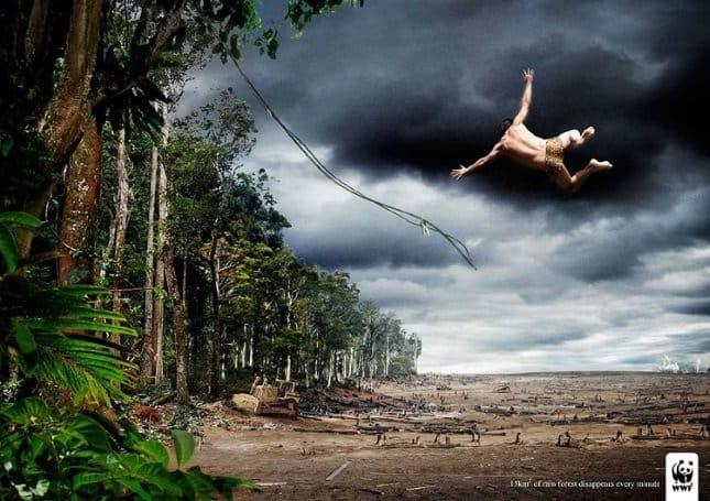Publicitate incisivă - Despădurire