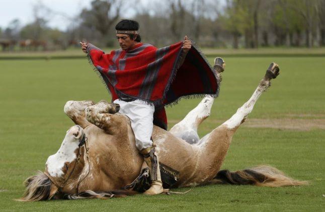 Îmblânzirea calului