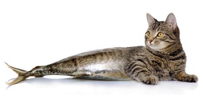 Devenim ceea ce mâncăm - Pisică și pește