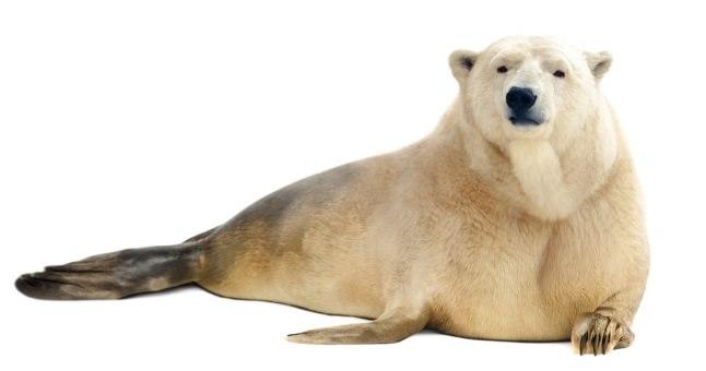 Urs polar și focă