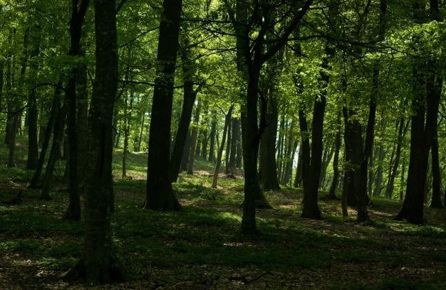 Plimbare prin pădure