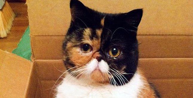 animale cu mustață 1