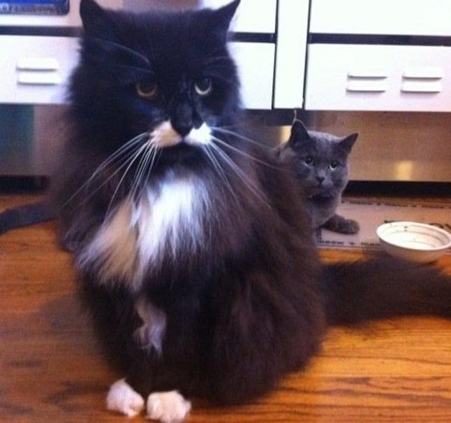 animale cu mustață 14