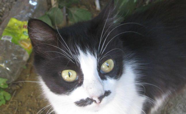 animale cu mustață 17