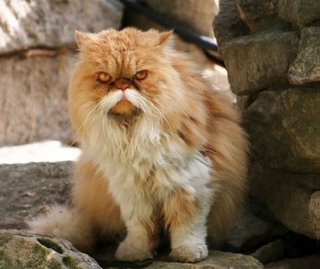 animale cu mustață 19