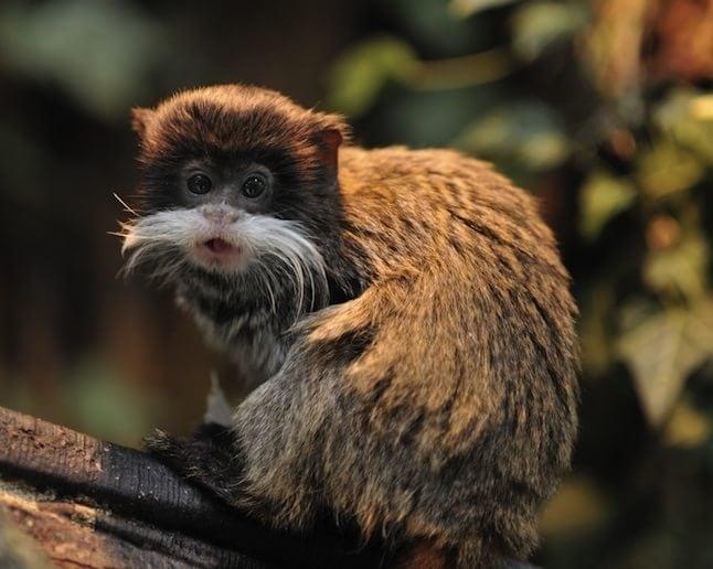animale cu mustață 20