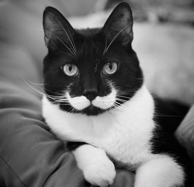 animale cu mustață 21