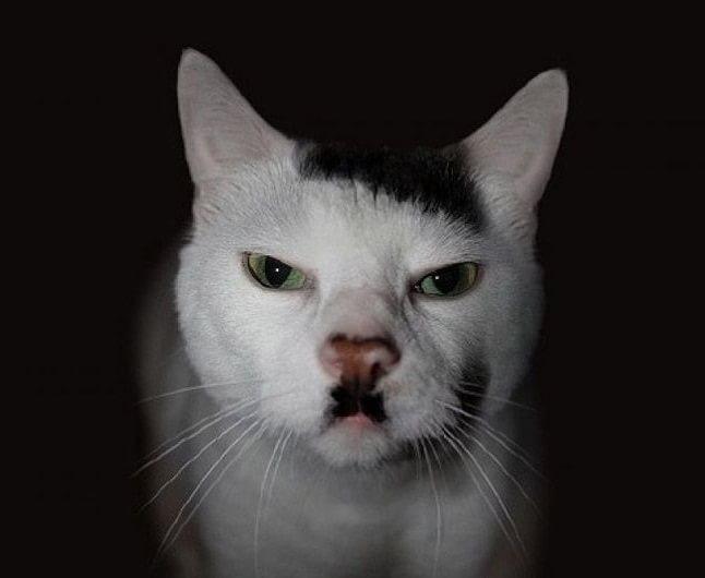 animale cu mustață 22