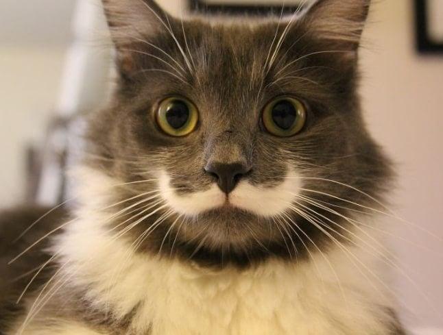 animale cu mustață 23