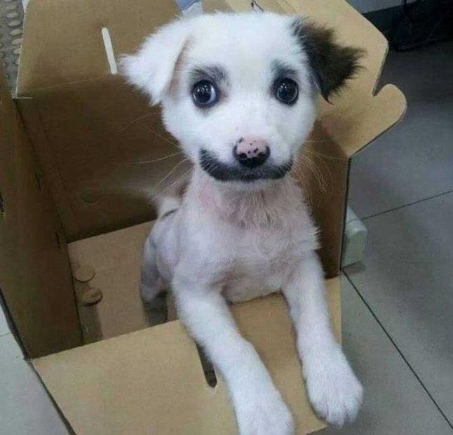 animale cu mustață 4