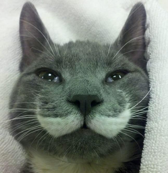 animale cu mustață 5
