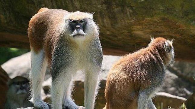 animale cu mustață 7