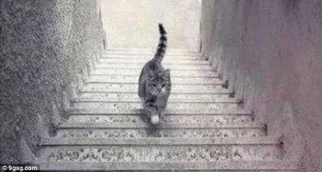 Pisica urcă sau coboară?