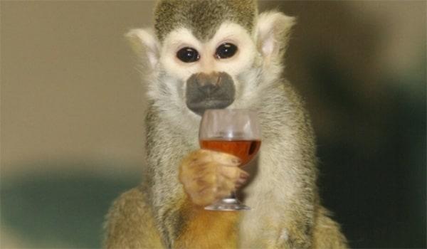 Contribuabilii americani - Maimuța beată