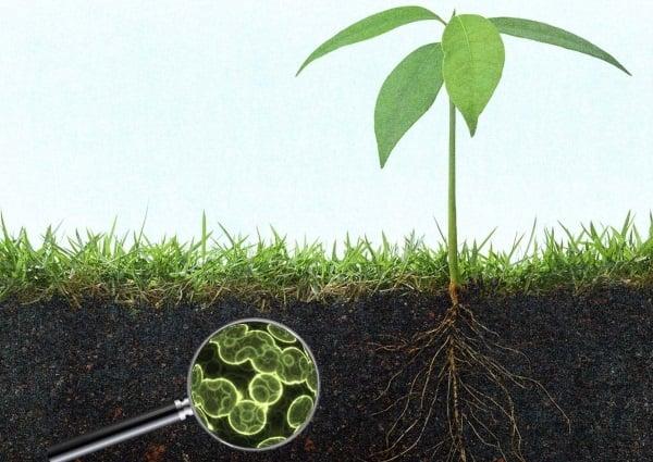 Micro-biomul solului