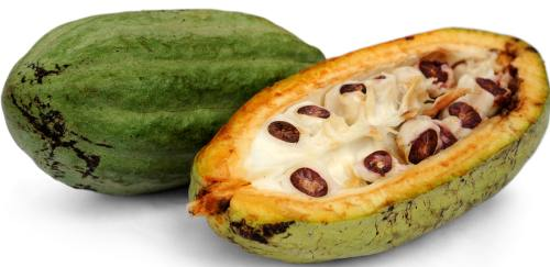 Ciocolata - Fructul arborelui de cacao