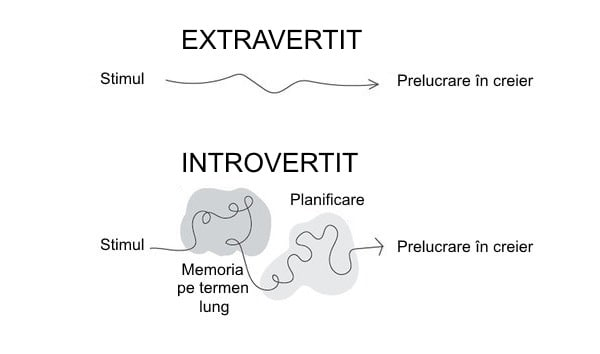 Cum se comportă creierul unui introvertit