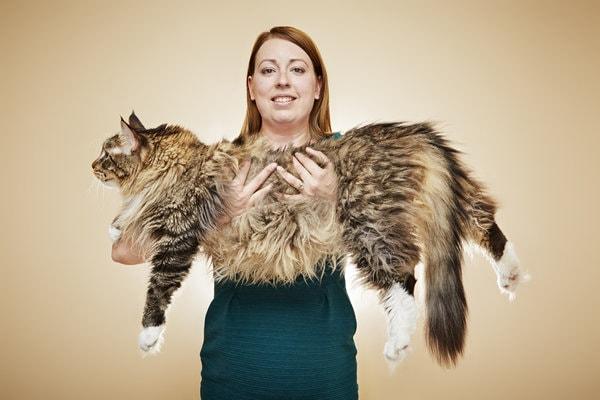 Cea mai lungă pisică