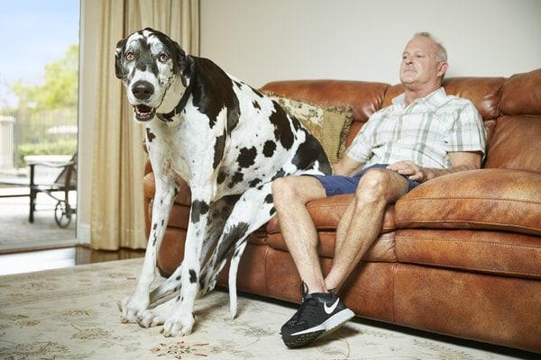 Cel mai înalt câine