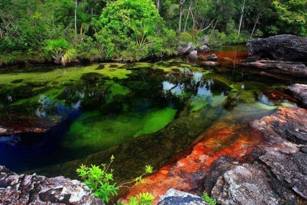 Râul în cinci culori - Caño Cristales